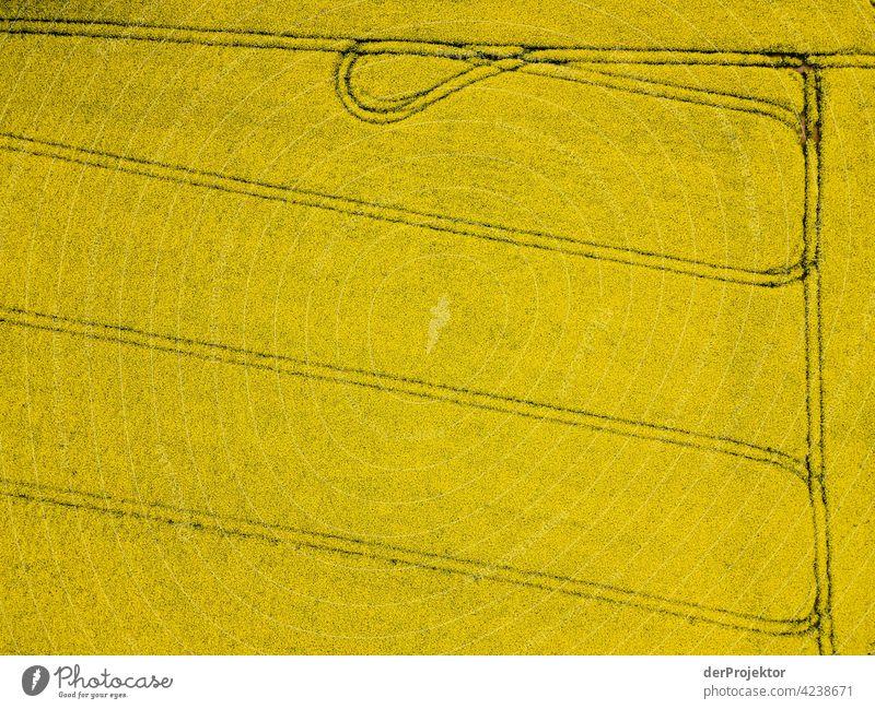 Rapsfeld in gelb mit Schleife Luftbild Feld Freiheit Abenteuer Ausflug Tourismus Ferien & Urlaub & Reisen Lebensfreude Naturwunder Naturerlebnis ästhetisch
