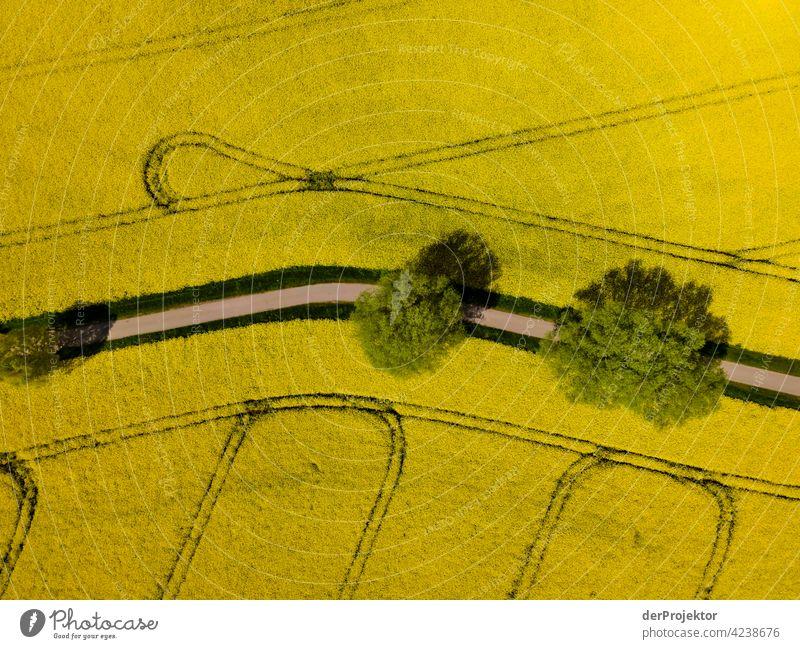 Rapsfeld in gelb mit Weg und Bäumen II Luftbild Feld Freiheit Abenteuer Ausflug Tourismus Ferien & Urlaub & Reisen Lebensfreude Naturwunder Naturerlebnis
