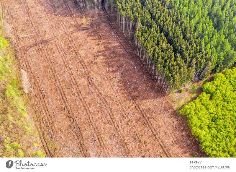ein gefälltes Waldstück von oben gefällter Wald abgeholzter Waldteil Waldarbeiter Tauwald grün braun Klimawandel Borkenkäfer Toter Wald Holz Holzproduktion