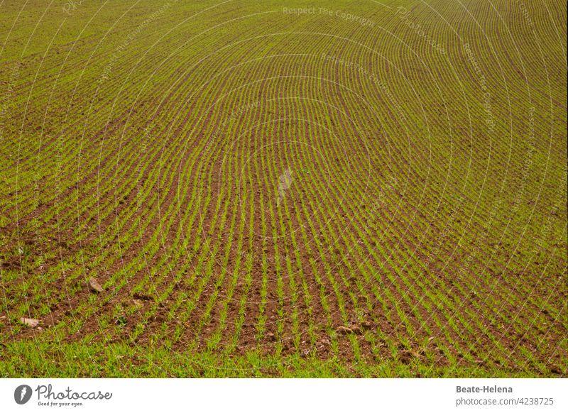 Es geht voran: Feld mit keimendem Saatgut! Frühling Linien Muster Kurve Eleganz Wachstum wachstumslinie grün Grünfläche Ackerland Ackerbau Unendlichkeit