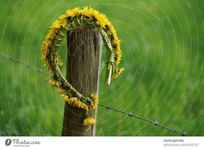 Blumenkranz als Schmuck aus Pusteblumen oder Löwenzahn auf dem Lande,  araxacum sect. Ruderalia Landleben Liebe Natur Bauernhof Leben Zaun Geschenk Mai
