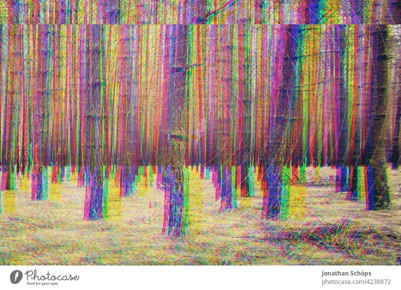 kahle Baumstämme im Wald mit Glitch Effekt Baumstamm Nadelwald Natur Landschaft Außenaufnahme Menschenleer Umwelt Farbfoto Forstwirtschaft Umweltschutz