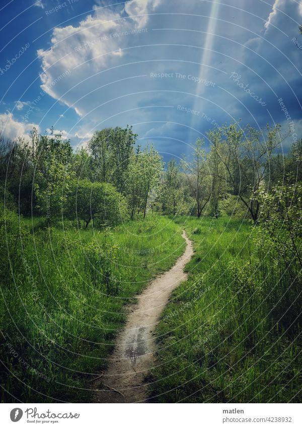 Sonnenstrahl Landschaft pfad weg grün wolken Weg Natur Umwelt Außenaufnahme Himmel Bäume Gewitterwolke Impuls