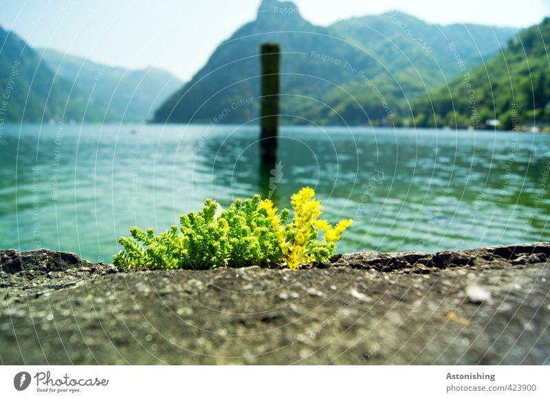 am Traunsee Umwelt Natur Landschaft Pflanze Wasser Himmel Wolkenloser Himmel Horizont Sommer Wetter Schönes Wetter Gras Hügel Alpen Berge u. Gebirge Sonnstein
