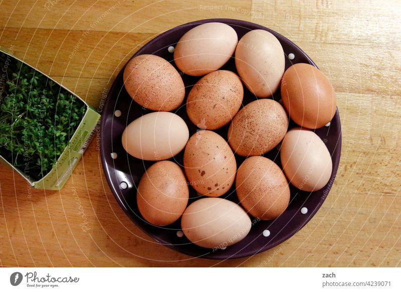 Empfehlung | Frühstücksei Essen Ei Hühnerei Lebensmittel Ernährung Bioprodukte braun Osterei Vegetarische Ernährung eier Spiegelei Kresse Teller