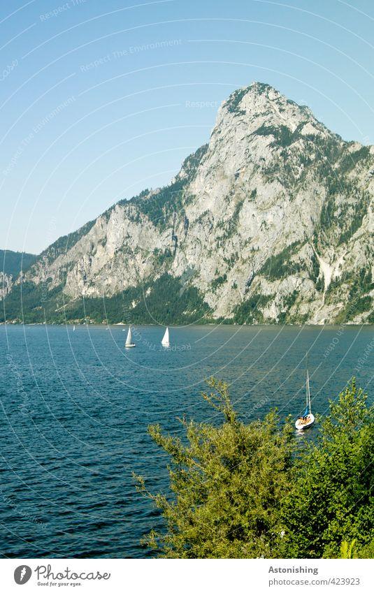 Traunstein Segeln Umwelt Natur Landschaft Pflanze Wasser Himmel Wolkenloser Himmel Sommer Wetter Schönes Wetter Wärme Baum Blatt Alpen Berge u. Gebirge Gipfel