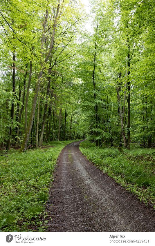 Empfehlung | Ausflug ins Grüne Wald grün Frühling Baum Außenaufnahme Natur Farbfoto Pflanze Landschaft Menschenleer Tag Umwelt natürlich Schönes Wetter