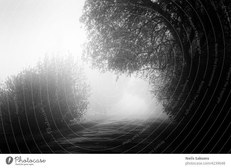 unbekannter Weg, Herausforderung ins Nirgendwo, Nebel für alle Gasse Herbst Hintergrund Ast Farben Land Morgendämmerung laubabwerfend Umwelt fallen neblig