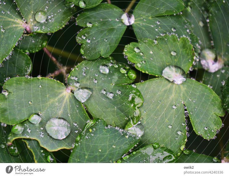 Wassergarten Regentropfen Wasserperlen Blattgrün funkeln geheimnisvoll Leben Kontrast Sonnenlicht glänzen leuchtend Morgen Tautropfen Menschenleer