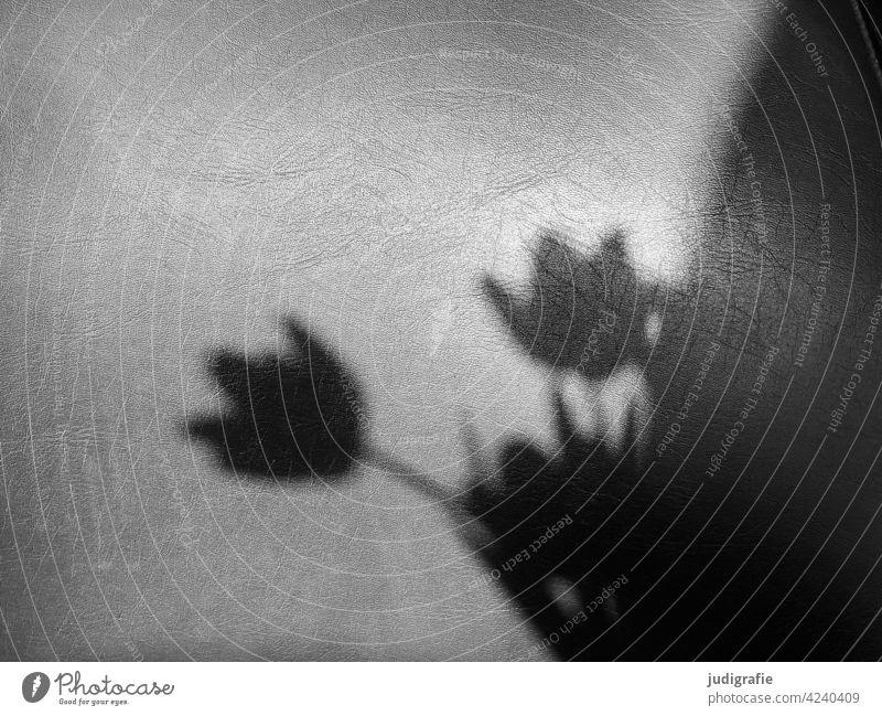 Schatten eines Tulpenstraußes auf dem Lederbezug einer Stuhllehne Licht Schattenspiel Blumenstrauß Blüte Frühling Pflanze Blühend Tulpenblüte Schwarzweißfoto