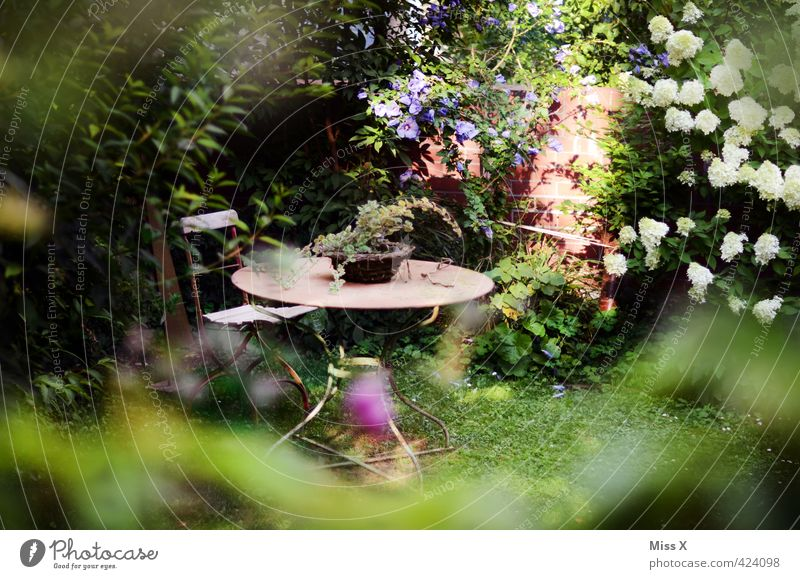 Idylle Zufriedenheit Erholung ruhig Häusliches Leben Wohnung Garten Sommer Pflanze Baum Blume Sträucher Blatt Blüte Grünpflanze Topfpflanze Stadtrand Terrasse