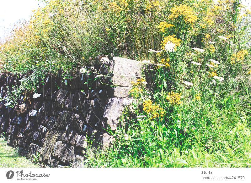Kraft der Natur - alte Mauer bewachsen mit Wildpflanzen überwuchert Mauerpflanzen Mauersteine Mauerblumen Steinmauer üppige Vegetation hinauswachsen überwuchern