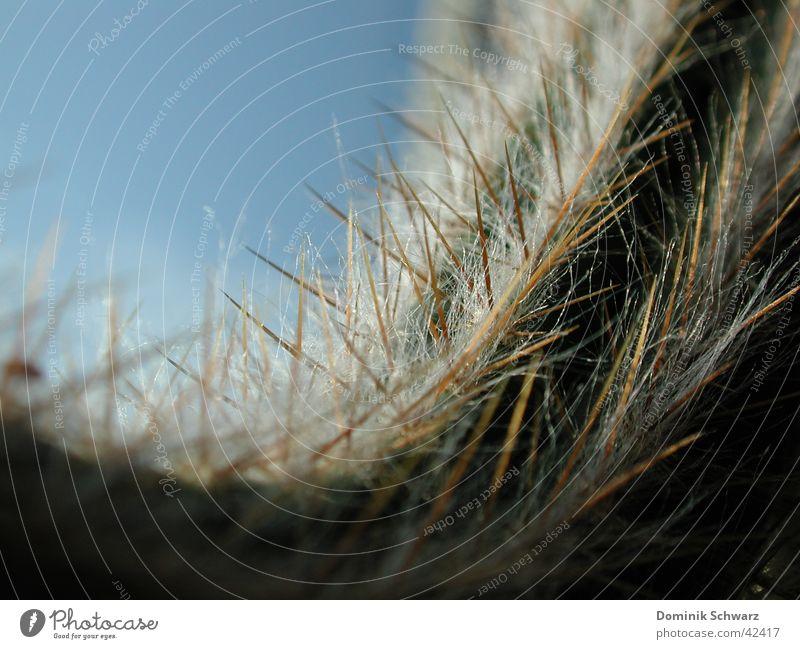 Flauschig spitz Himmel Natur grün Pflanze Haare & Frisuren gefährlich Wachstum Spitze Wüste trocken Kaktus Stachel Defensive Härchen