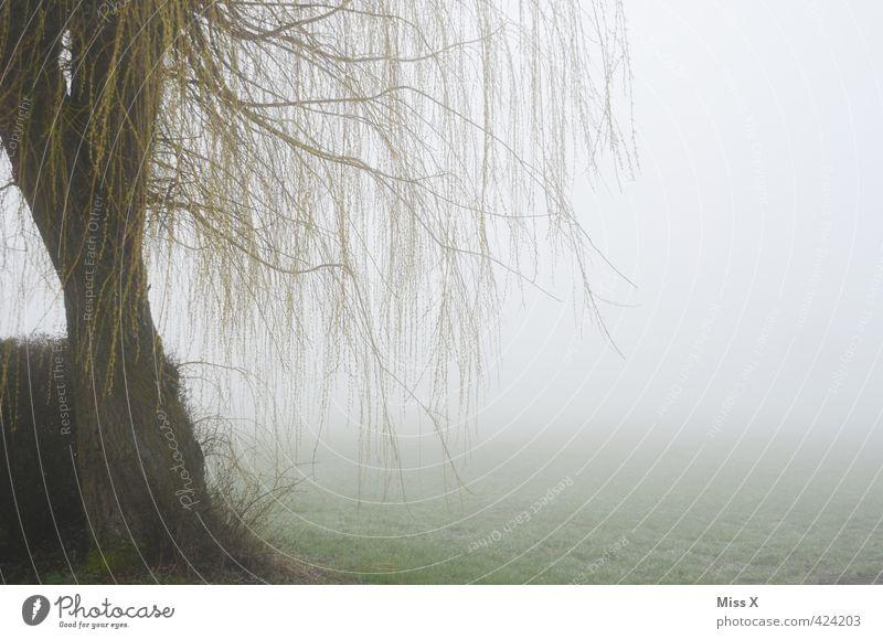 Nebel-Weide Natur Herbst Winter Wetter schlechtes Wetter Unwetter Regen Baum hängen kalt Traurigkeit Sorge Trauer Tod Unlust Einsamkeit Erschöpfung