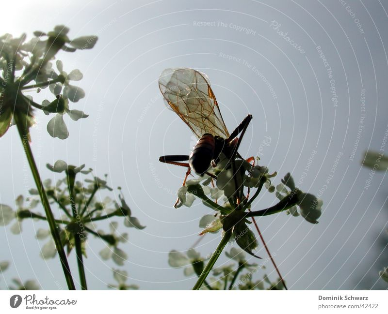 Sommerluft Natur Himmel Pflanze Tier fliegen Flügel Insekt
