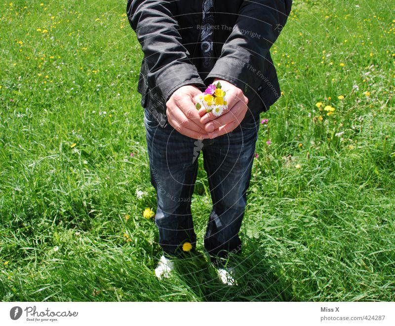 da Schatz Mensch Kind Mann Jugendliche Sommer Blume Erwachsene Junger Mann 18-30 Jahre Liebe Wiese Gefühle Frühling Stimmung maskulin Geburtstag