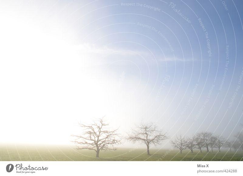Heile Welt in Jungingen Landschaft Himmel Frühling Herbst Winter Wetter Schönes Wetter Nebel Baum Wiese leuchten positiv Stimmung Hoffnung Horizont Idylle Natur