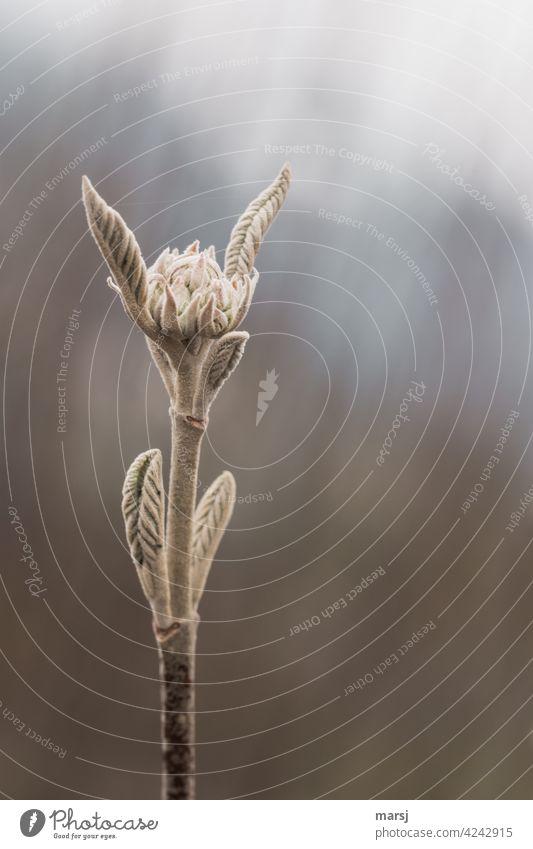 Emporstrebende Pflanze mit Entfaltungsmöglichkeiten Wachstum Beginn Frühlingsgefühle Blatt Natur Mut Hoffnung Leben Erwartung grün Sträucher Grünpflanze Kraft