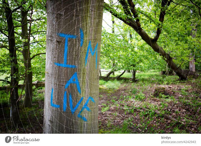 I am alive , englische Aufschrift auf einer Buche im Wald Baum Rotbuche Schriftzeichen Klimawandel Naturschutz Baumsterben Trockenheit Erderwärmung