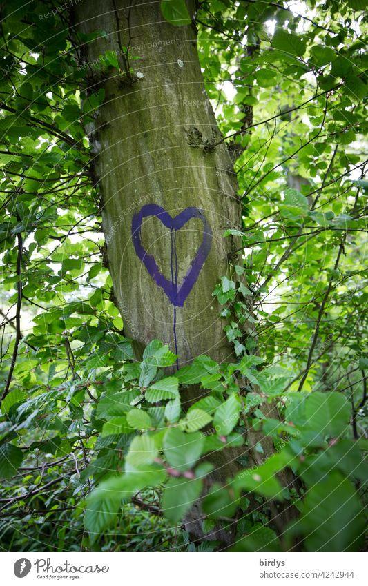Ein Herz auf einen belaubten Baum gemalt. Liebe, Liebesbekundung baum Sommer Natur Romantik Verliebtheit Blätter Buche Gefühle positive Gefühle Liebeserklärung