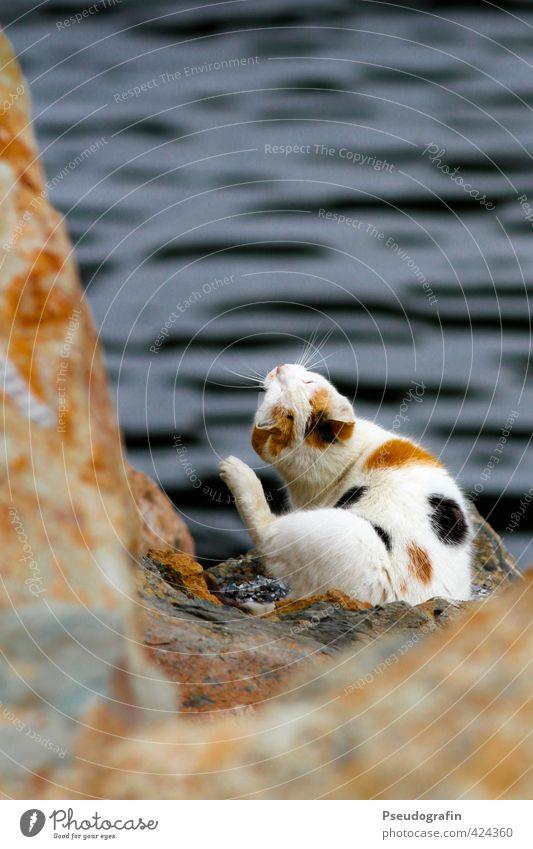 Bunte Mietz Tier Haustier Katze Pfote 1 Erholung sitzen braun Zufriedenheit ruhig Trägheit Farbfoto mehrfarbig Außenaufnahme Menschenleer Textfreiraum oben