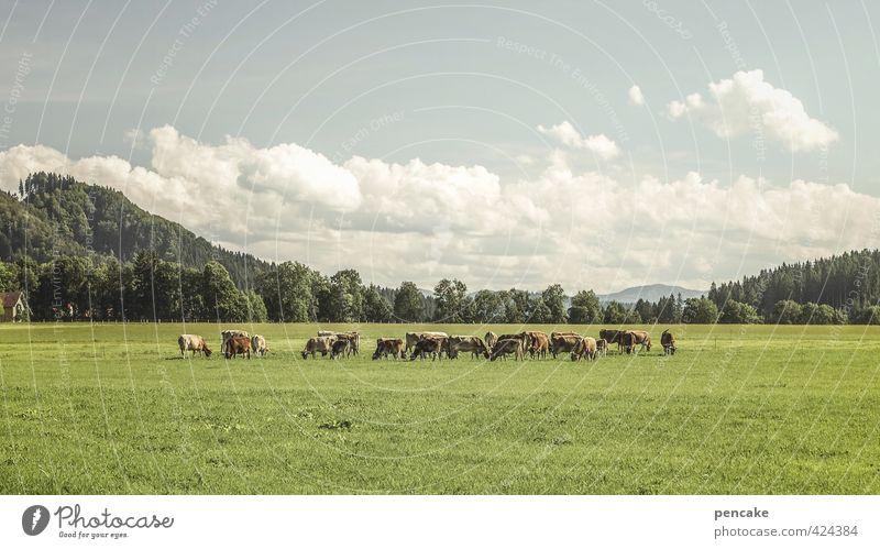 allgäu prärie Himmel Natur blau grün Sommer Landschaft Wolken Wald Wiese Gras Zusammensein offen Wachstum frei Schönes Wetter ästhetisch