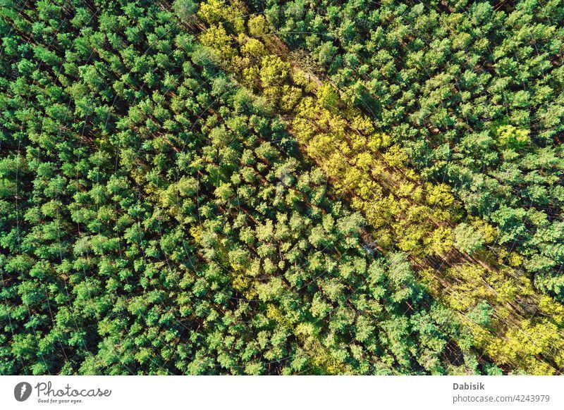 Grüner Sommer Wald Hintergrund, Luftaufnahme. Natur Landschaft schön abstrakt Antenne grün Schönheit weißrussland Ökosystem Umwelt Europa hoch idyllisch