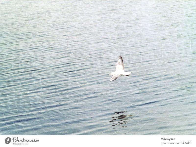 Mövenflug Wasser Vogel Möwe Wasseroberfläche fliegend Vogelflug Wasserspiegelung