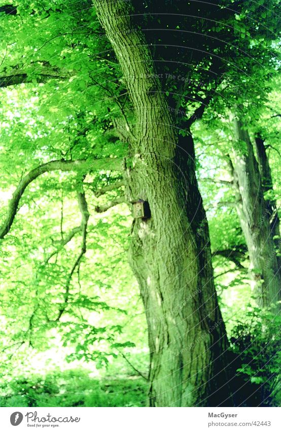 vogelwohnung Natur Baum grün Wald 30 Futterhäuschen