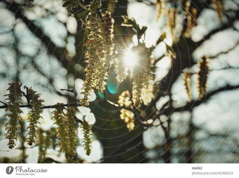 Blinzelbaum Baum Farbfoto Landschaft Zweige hängen Außenaufnahme draußen Natur Frühling Zweige u. Äste Menschenleer Umwelt Pflanze natürlich Wald Wachstum