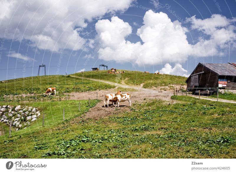 sudelfeld Natur Landschaft Himmel Wolken Sommer Schönes Wetter Wiese Alpen Berge u. Gebirge Gipfel Kuh hoch natürlich ruhig Erholung Freizeit & Hobby Gesundheit