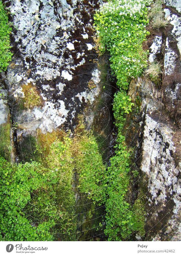 Moos auf Stein grün kalt Felsen feucht