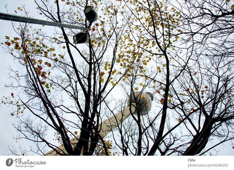 Fernsehturm über Bäumen Berliner Fernsehturm Blätter Beleuchtung Lampen Alexanderplatz Wahrzeichen Hauptstadt Sehenswürdigkeit Turm Berlin-Mitte Architektur