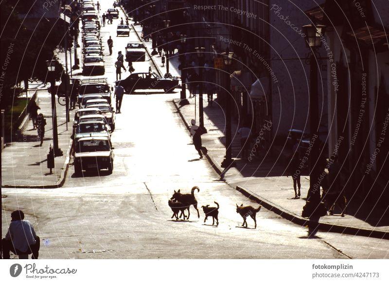 Hunde auf der Straße straßenhunde streetlife Tier Kontrast Leben Leben auf der Straße Autos Außenaufnahme Großstadt citydog Stadtleben Tag Licht südamerika