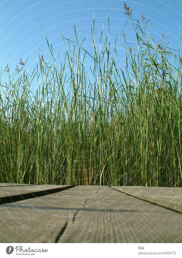 der schöne Holzweg Himmel grün blau Schilfrohr Steg Schiffsplanken