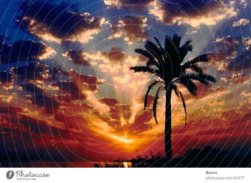Sonnenuntergang Himmel Sonne Meer Strand Ferien & Urlaub & Reisen Wolken Gefühle Romantik Palme