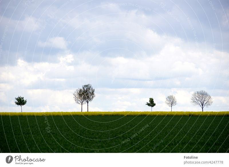Bäume säumen einen Straßenrand und halten Wind und Wetter stand. Baum Natur Landschaft Umwelt Außenaufnahme Menschenleer Farbfoto Tag Pflanze grün Himmel