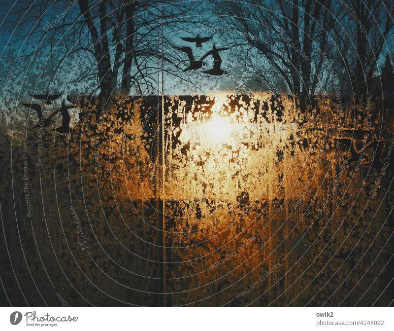 Wintersonne Eiskristall Reflexion & Spiegelung Gegenlicht Glasscheibe Sonnenlicht Schatten Licht gefroren Zweige u. Äste Natur Muster Schönes Wetter abstrakt