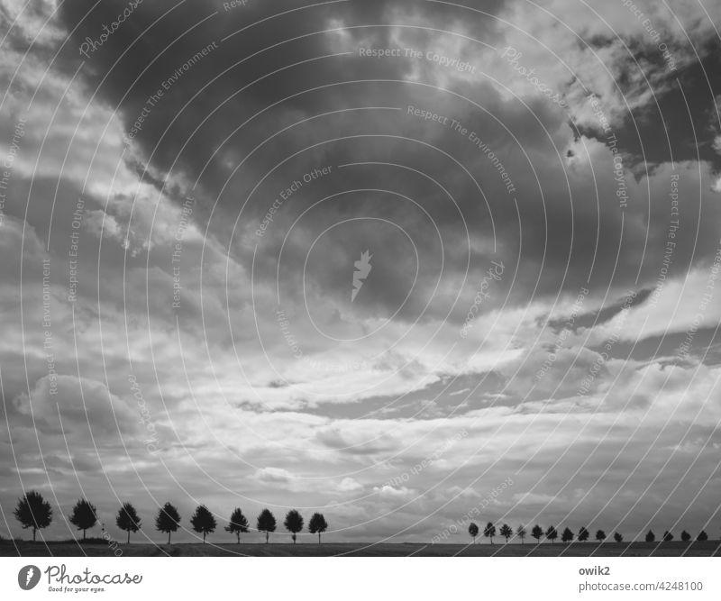 Verschwindend Landschaft Himmel Wolken Wege & Pfade Baum Spalier Wachstum Natur Umwelt Horizont akkurat Genauigkeit Außenaufnahme Menschenleer Silhouette Straße
