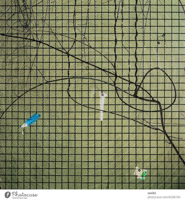 Verfangen Barriere Maschendraht Zaun Maschendrahtzaun Kletterpflanzen Menschenleer Draht Sicherheit Ranke Detailaufnahme Drahtzaun Grenze Fassade Linie Muster