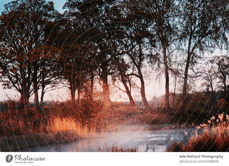 Frühmorgendlicher Nebel steigt langsam aus dem verschlafenen Teich auf Morgen Teiche Natur Wasser See Reflexion & Spiegelung Windstille Menschenleer Seeufer