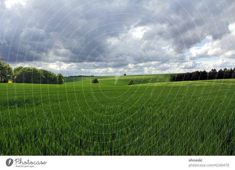 Kornfelder und bewölkter Himmel Landschaft Landwirtschaft Feld Außenaufnahme Wolken Umwelt grün Ackerbau Getreidefeld Nutzpflanze Weite ökologisch
