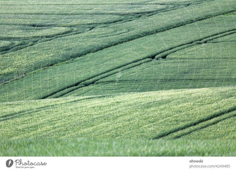 Kornfeld Feld Landwirtschaft Getreide Ackerbau Spuren Nutzpflanze Ernährung Umwelt Außenaufnahme