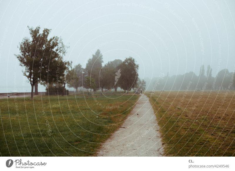 am rhein Wiese Wege & Pfade nebelig Baum Natur Menschenleer Landschaft Nebel diesig verlassen ruhig