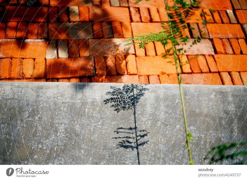 Schattenpflanzen an der Wand Architektur Hintergrund Klotz Baustein Zement Beton Konstruktion Außenseite Golfloch Industrie Material alt Muster rau Stapel