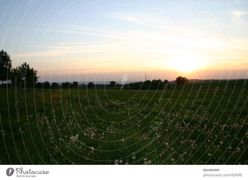 Sonnenuntergang mit Fernsehturm Dresden Licht Berge u. Gebirge Natur Landschaft