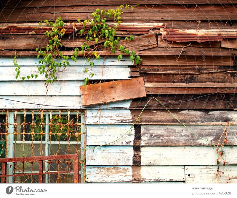 Eine interessante alte Holzhütte mit Reben, die darauf wachsen. Haus Hütte Metall Armut Bruchbude hölzern Nutzholz Fenster Bars Wein Kabel Draht Rust verfallen