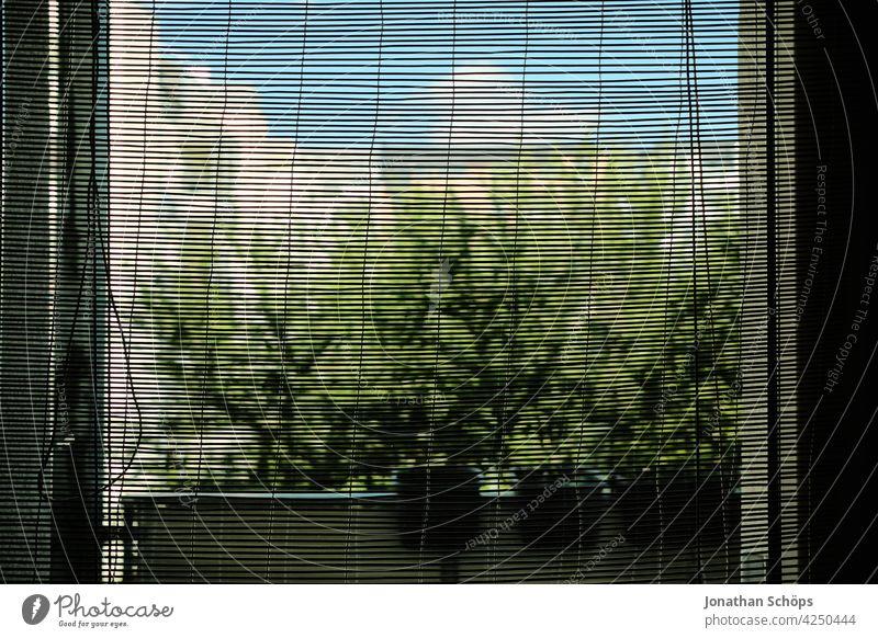 Bambus Rollo an Balkontür mit Blick nach Draußen Wohnung Wohnen Miete Mietwohnung Balkkontür Fenster Glas Bambusrollo Durchblick Ausblick grün Himmel raus Haus