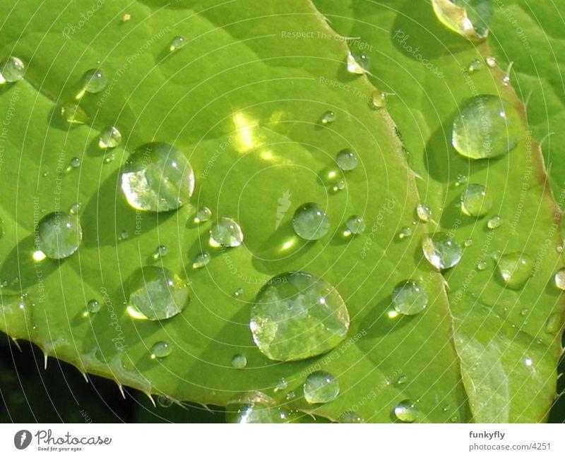 Waterdrops Makroaufnahme Natur Nahaufnahme Reflexion & Spiegelung water waterdrop Detailaufnahme leaf