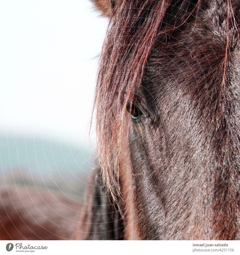 schöne braune Pferd Porträt auf der Wiese Tier wild Kopf Behaarung Natur niedlich Schönheit elegant wildes Leben Tierwelt ländlich Bauernhof Weidenutzung